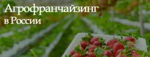 Масштабируем агрофранчайзинг